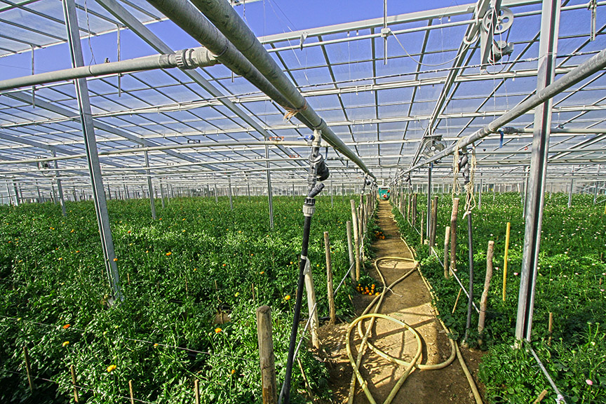 Greenhouse misting systems